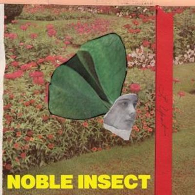 Noble Insect