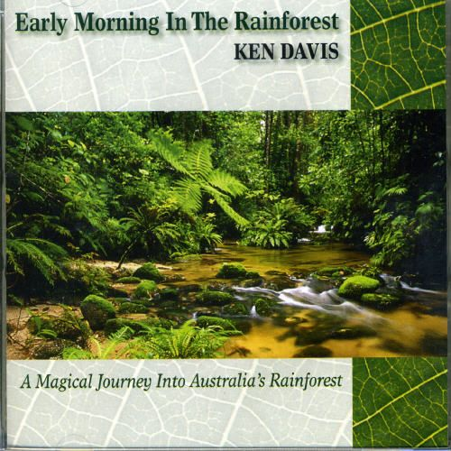 Early Morning in the Rainforest