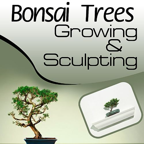 Bonsai Trees 101: Growing and Sculpting