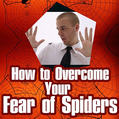 How to Overcome Your Fear of Spiders