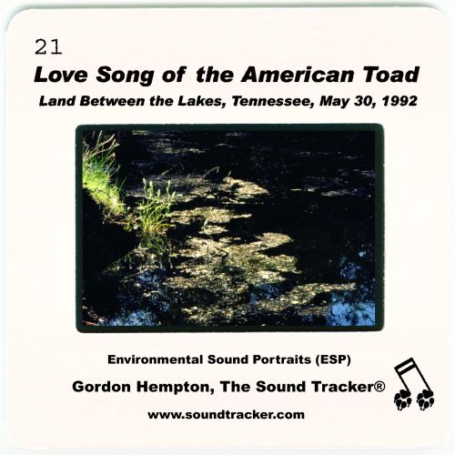 Love Song of the American Toad: Land-between-the-Lakes, Tennessee, May 30, 1992