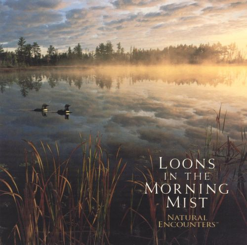 Natural Encounters: Loons in Morning Mist