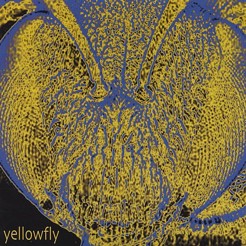 Yellowfly