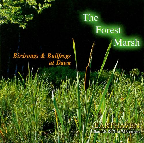 Sounds of the Wilderness: The Forest Marsh