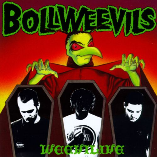 The Weevilive