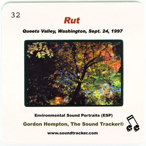 Rut: Queets Valley, Washington, Sept. 24, 1997