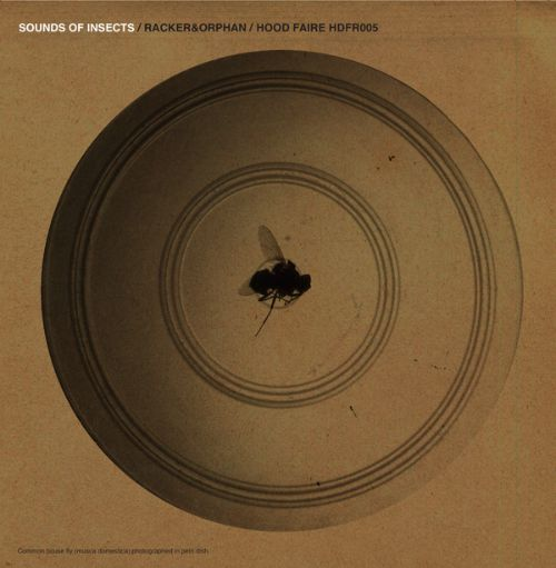Sounds of Insects