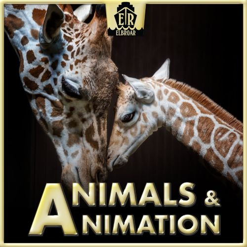 Animals & Animation-Optimistic, Folksy Ditties and Humorous Acoustic Arrangements