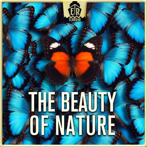 Beauty of Nature-Cheerful and Easygoing Acoustic Guitar Folk